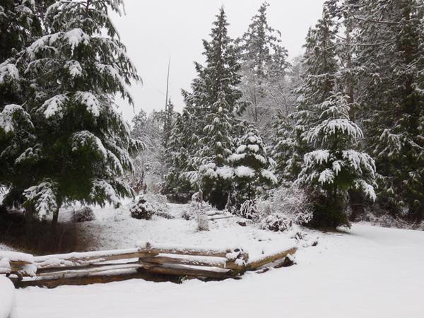 Winter snow Shaw Island.jpg