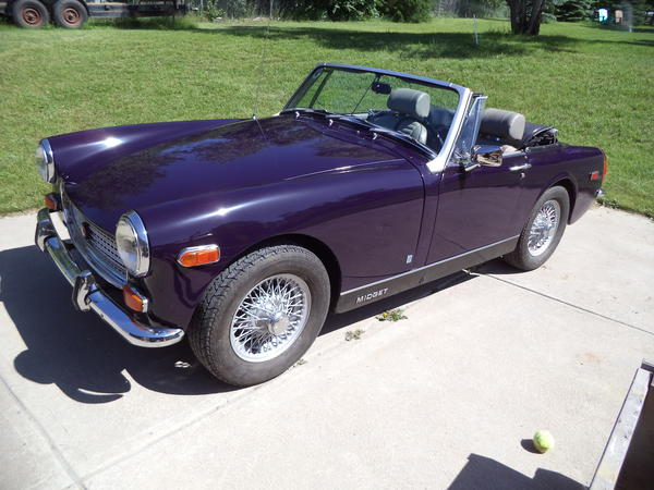 Black tulip mg midget